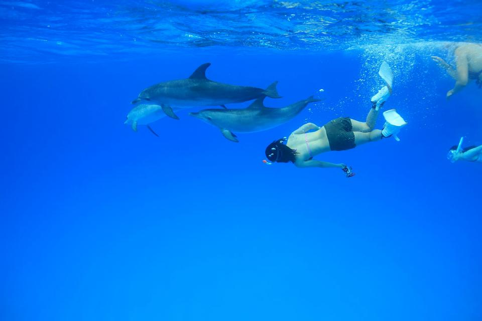 Swimming with the dolphins , Dolphins in the deep blue sea , Dominican Republic