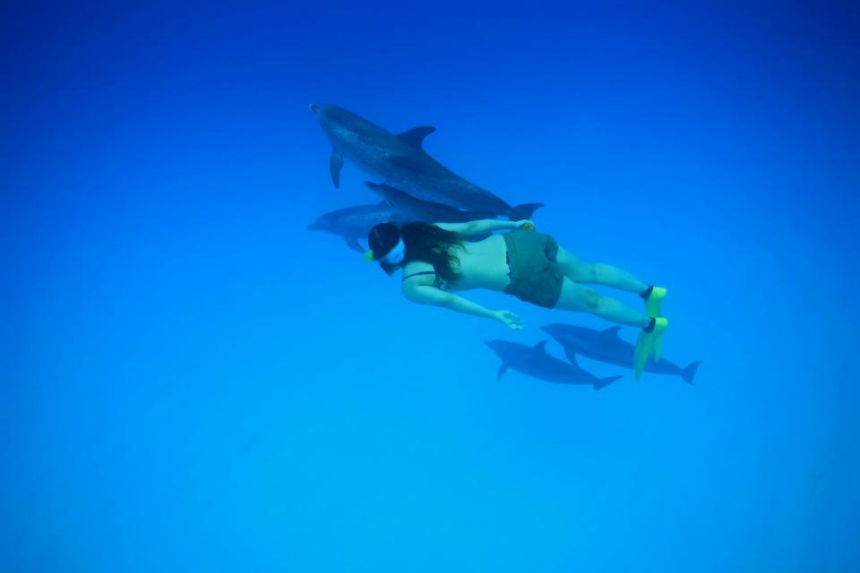 Nadar con delfines , Con el delfín Flipper , República Dominicana