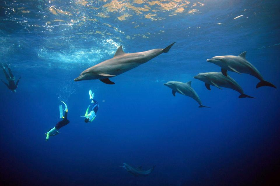 Swimming with the dolphins , Dominican Republic