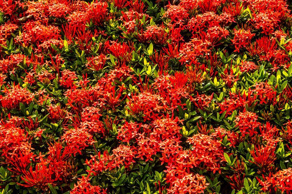 La flore , La flore 2 , Seychelles