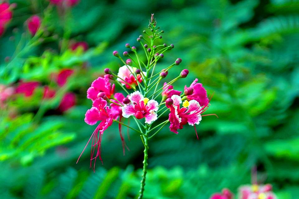 La flore , La flore 3 , Seychelles