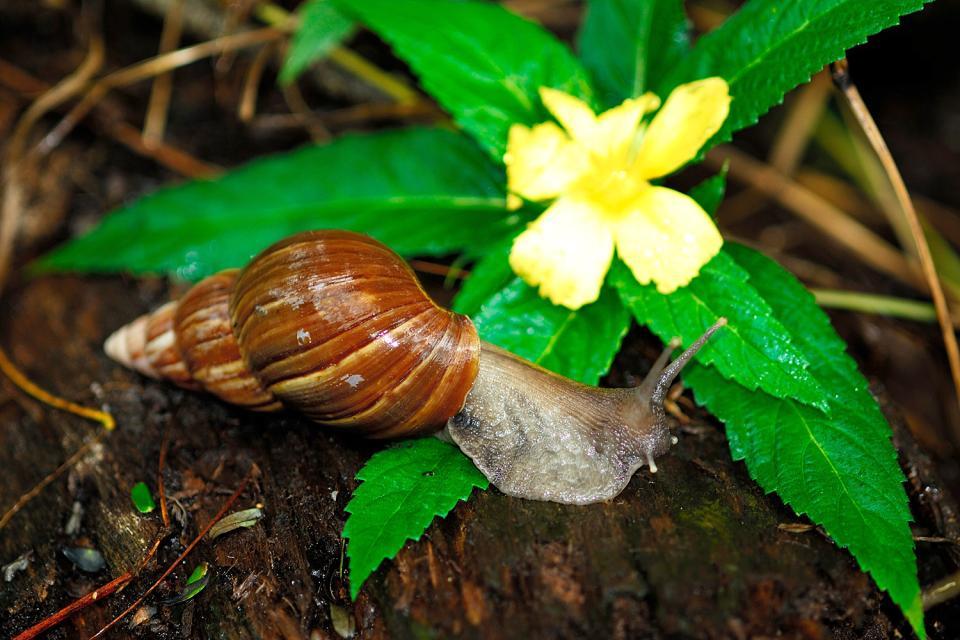 La flore , La flore 6 , Seychelles