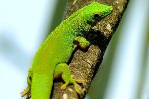 La faune terrestre , Seychelles