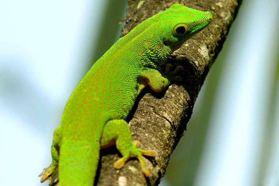 La fauna terrestre , Seychelles