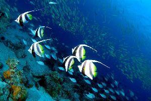 La faune sous-marine , Seychelles