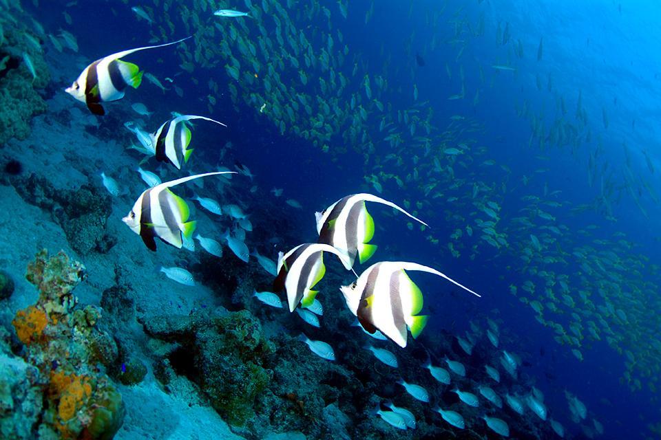 La fauna subacquea , La fauna sottomarina , Seychelles