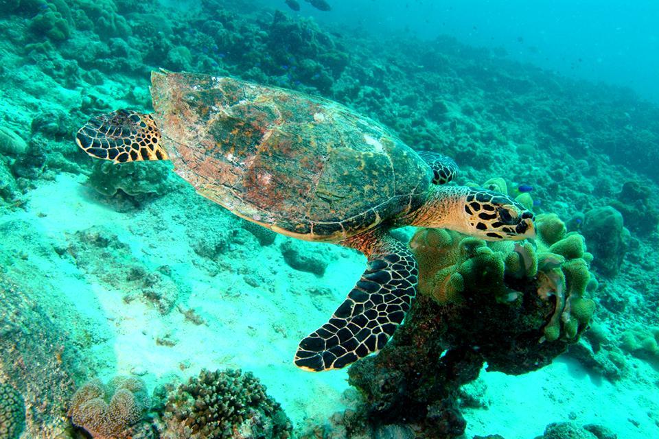 La fauna subacquea , La tartaruga di mare , Seychelles