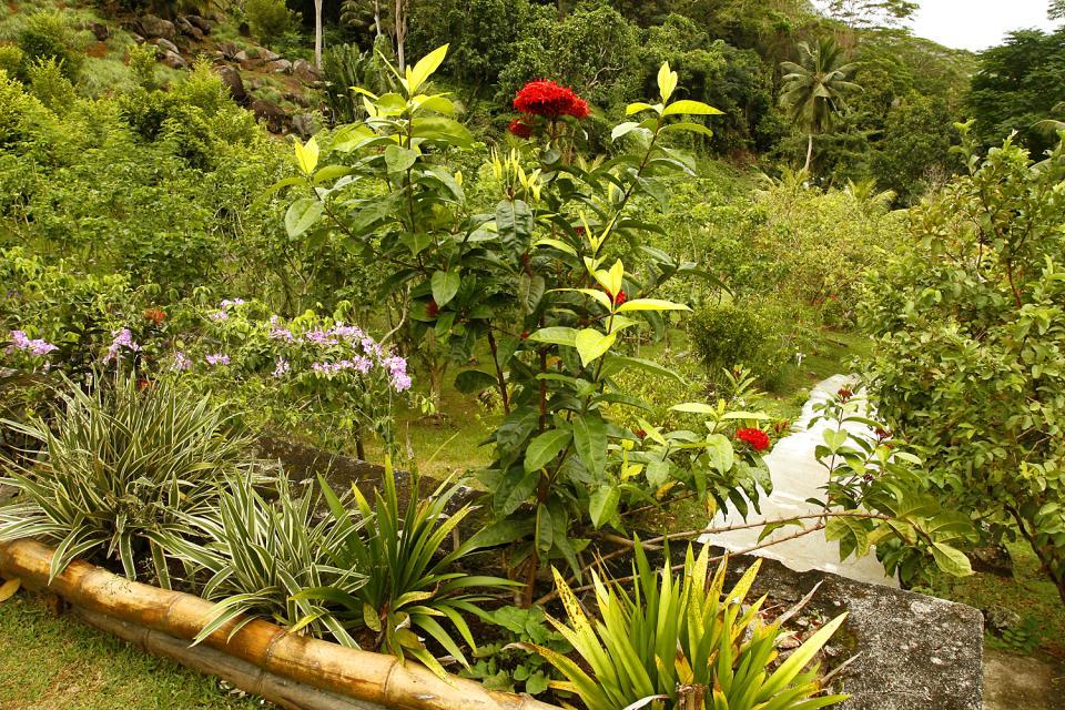 El jardín del Rey (Mahé) , El jardín de las Hespérides , Las Seychelles