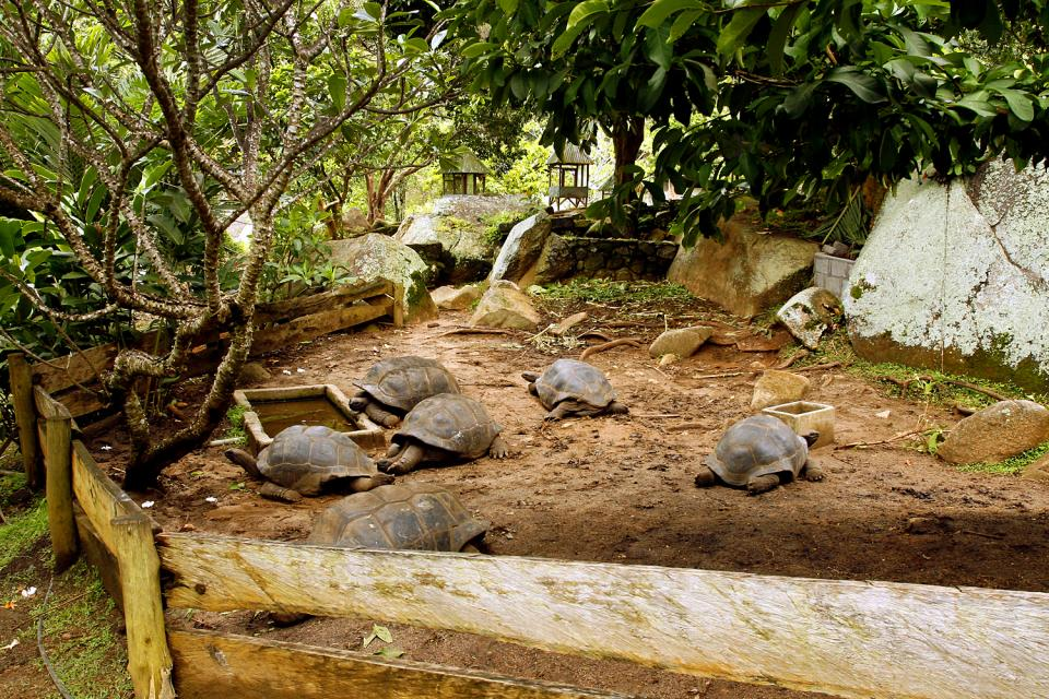 El jardín del Rey (Mahé) , Las tortugas gigantes de Seychelles , Las Seychelles