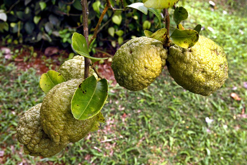 El jardín del Rey (Mahé) , El paraíso de la fruta. , Las Seychelles