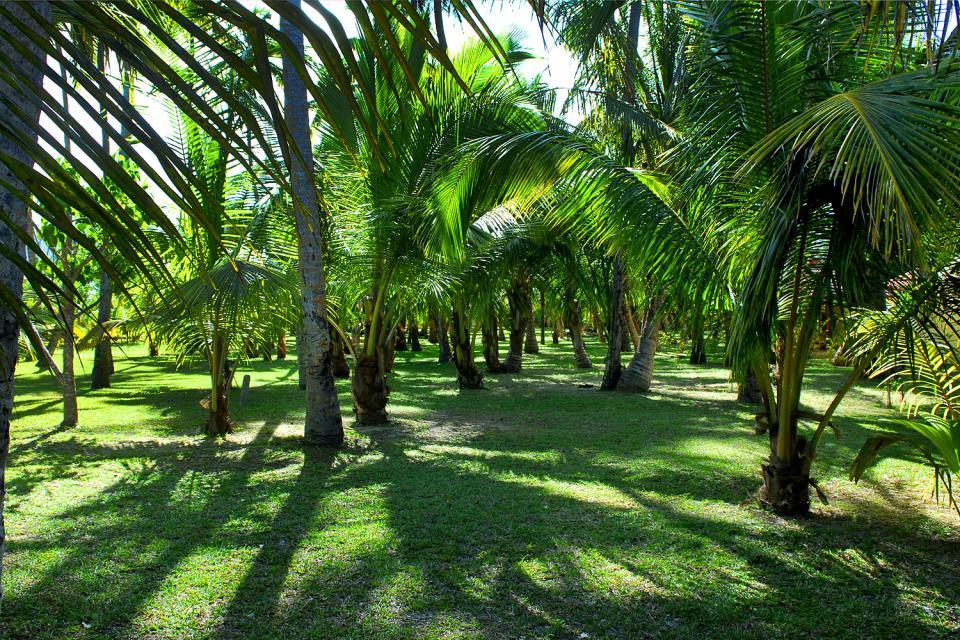 Sainte-Anne , Per gli amanti della natura , Seychelles