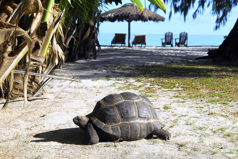 Denis Island , La piscina y su bar palapa , Las Seychelles
