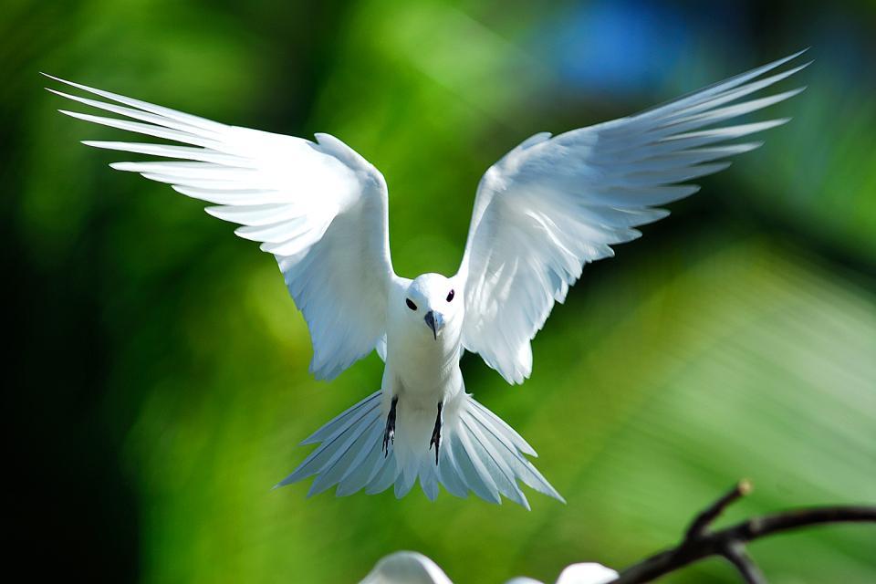 Cousin Island , Un rifugio per gli uccelli , Seychelles