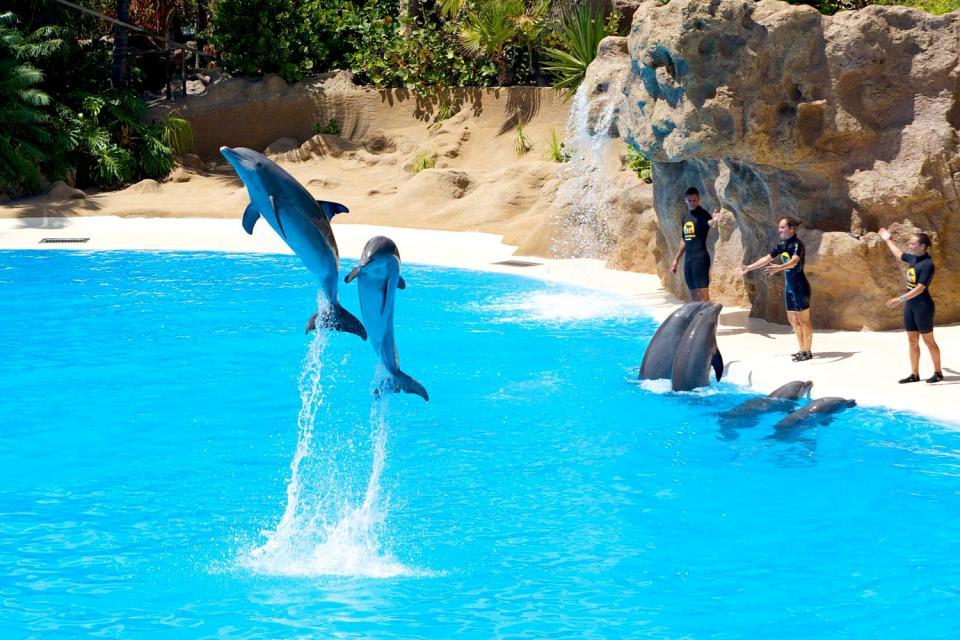 Le Loro Park , Un orque en plein action , Espagne