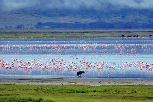 Le cratère du Ngorongoro , Tanzanie