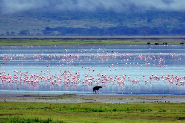 The Ngorongoro Crater , The crater of Ngorongoro , Tanzania