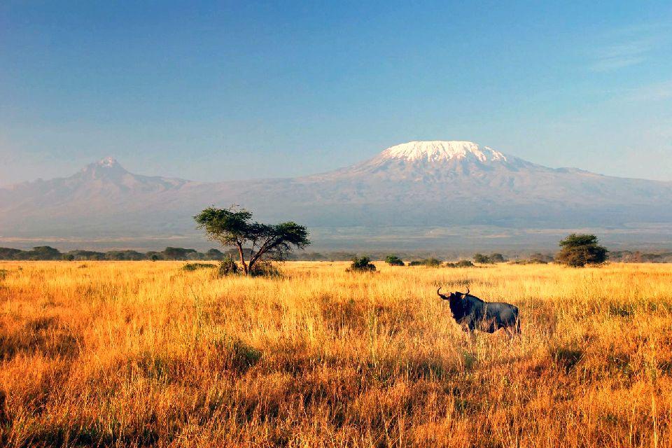 El Kilimanjaro , Un ñu delante del Kilimanjaro , Tanzania