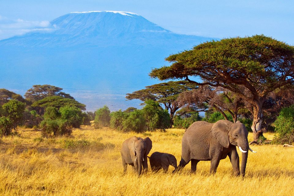 Le Kilimanjaro , Elephant et Kilimanjaro , Tanzanie