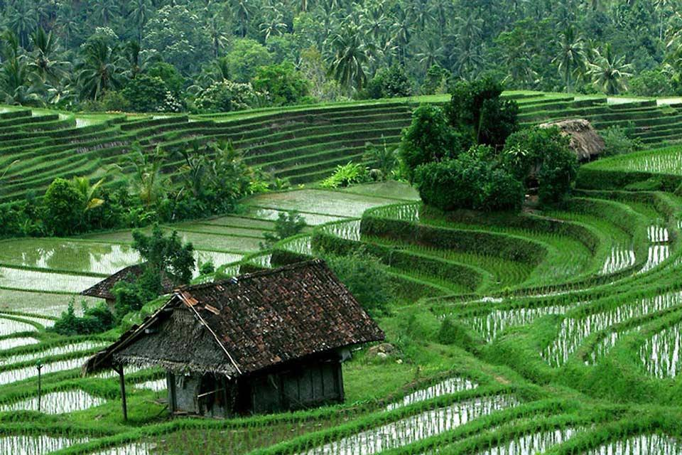 Terraced paddy fields , Terraced rice paddies , Indonesia