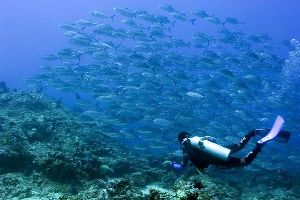 Diving and water sports , Indonesia