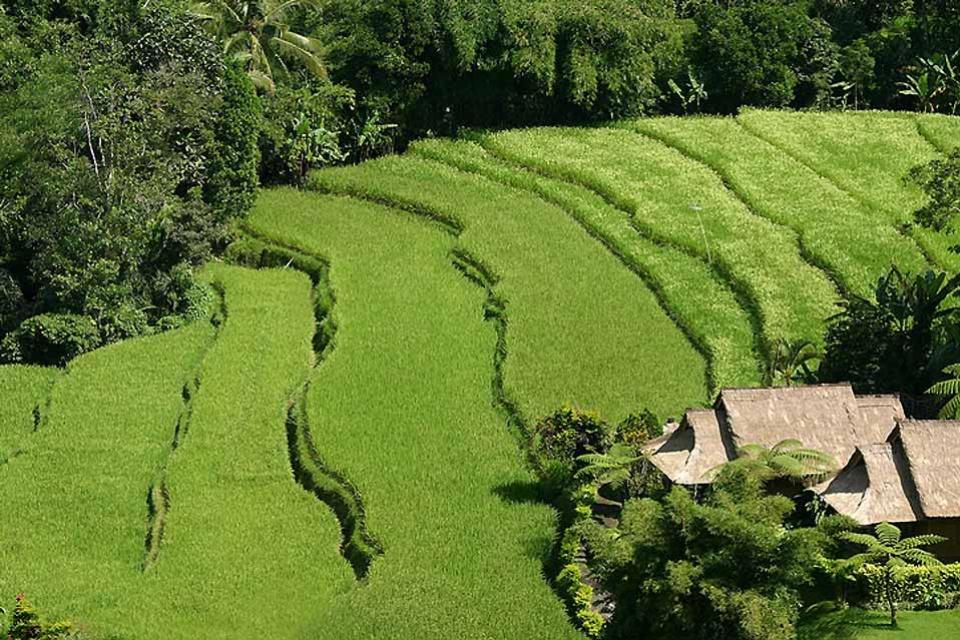 Hiking , Crossing Bali's rice terraces , Indonesia