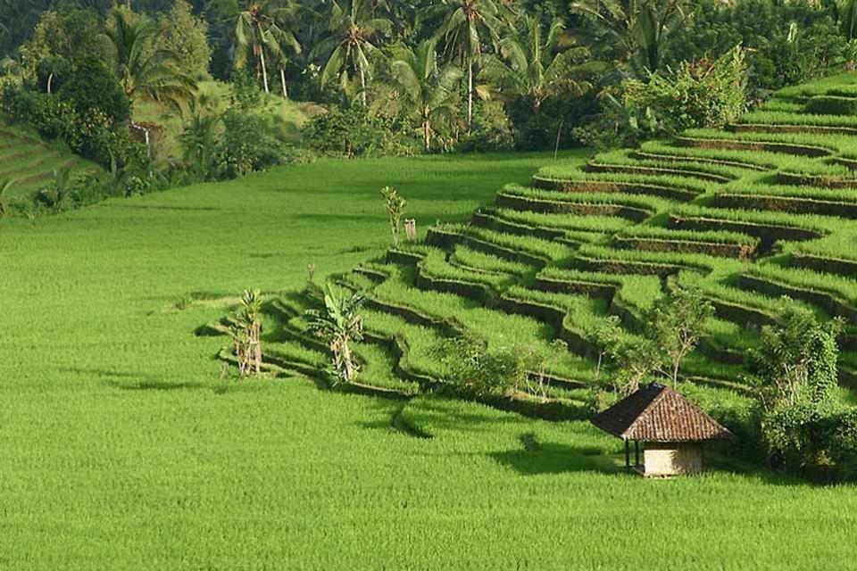 Hiking , Unspoilt Bali , Indonesia