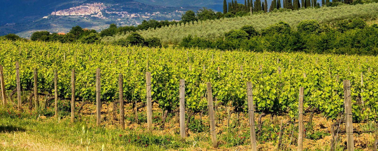 Le vin et la vigne , La vigne chypriote , Chypre