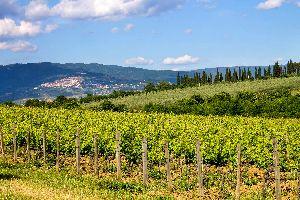 Le vin et la vigne , La viña chipriota , Chipre