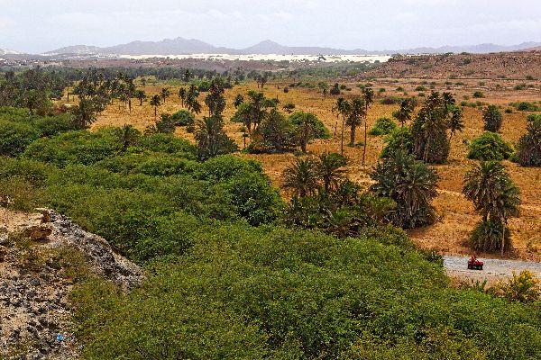 Die Insel Boa Vista , Die Oase von Rabil , Kap Verde