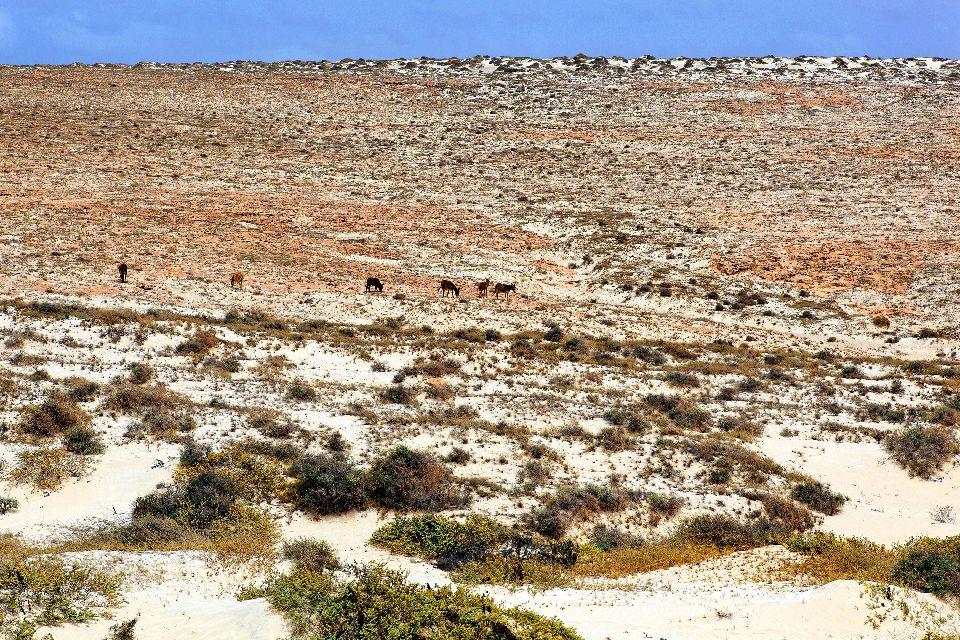 L'isola di Boa Vista , Il nord di Boa Vista , Capo Verde