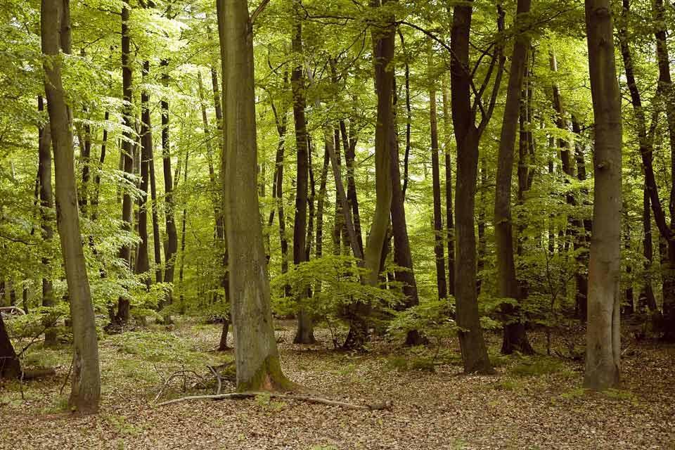 La forêt d'Orient , France