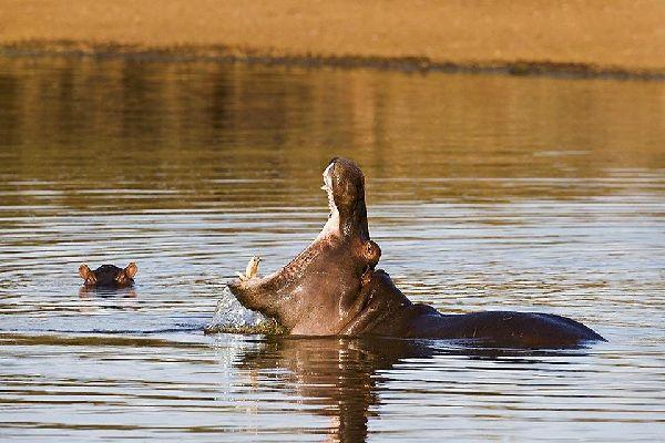 Der Kruger-Park , Safari im Krüger-Park , Südafrika
