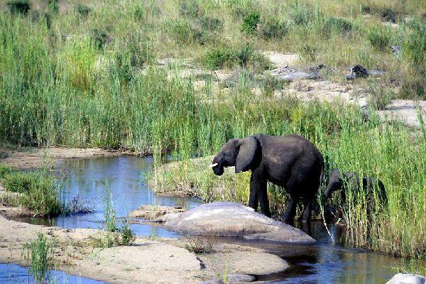 Der Kruger-Park , Die Big Five , Südafrika