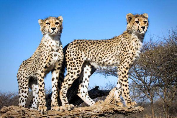 Der Kruger-Park , Beobachtung der afrikanischen Tierwelt , Südafrika