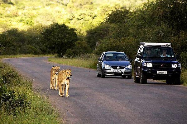 Der Kruger-Park , Die beste Jahreszeit für eine Safari? , Südafrika