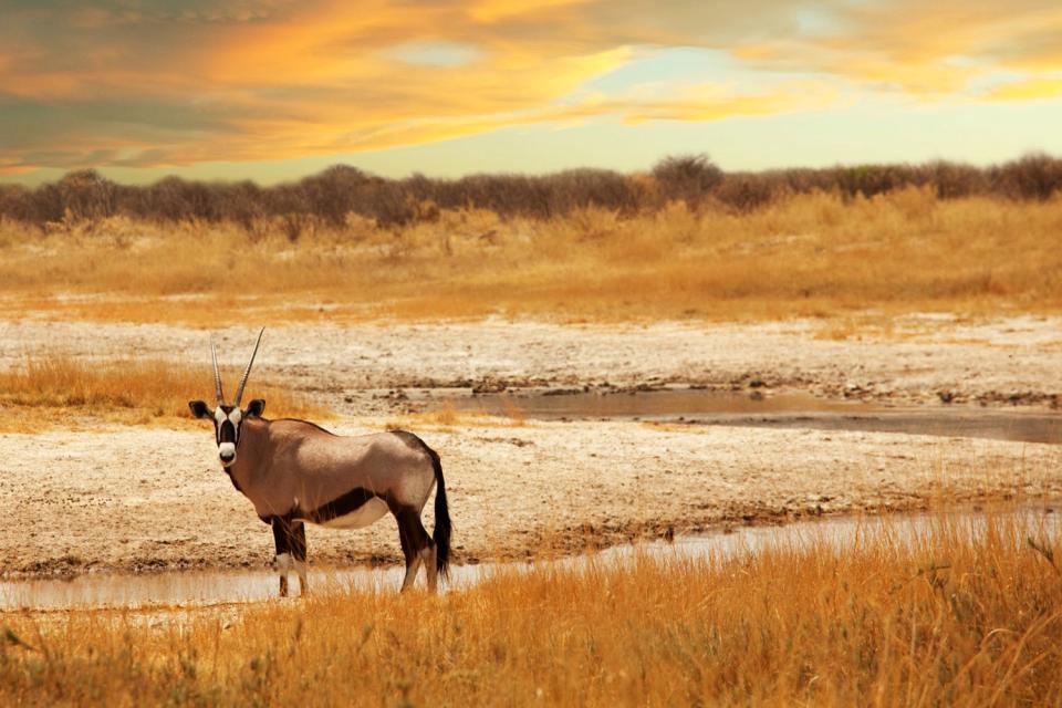 Le Parc Kruger , Circuit au Parc Kruger , Afrique du Sud