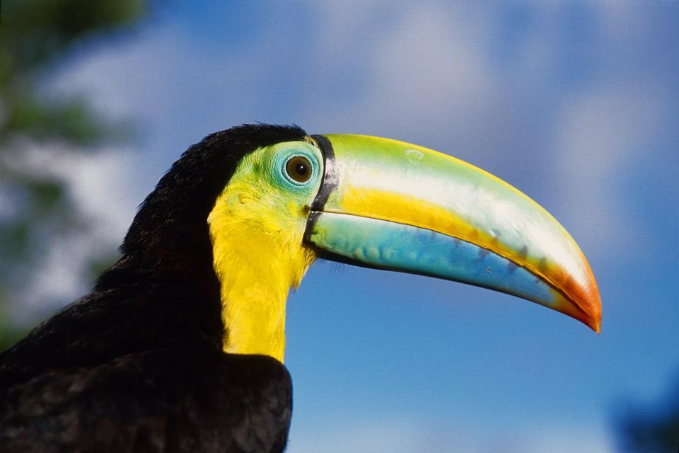 La faune , Panama
