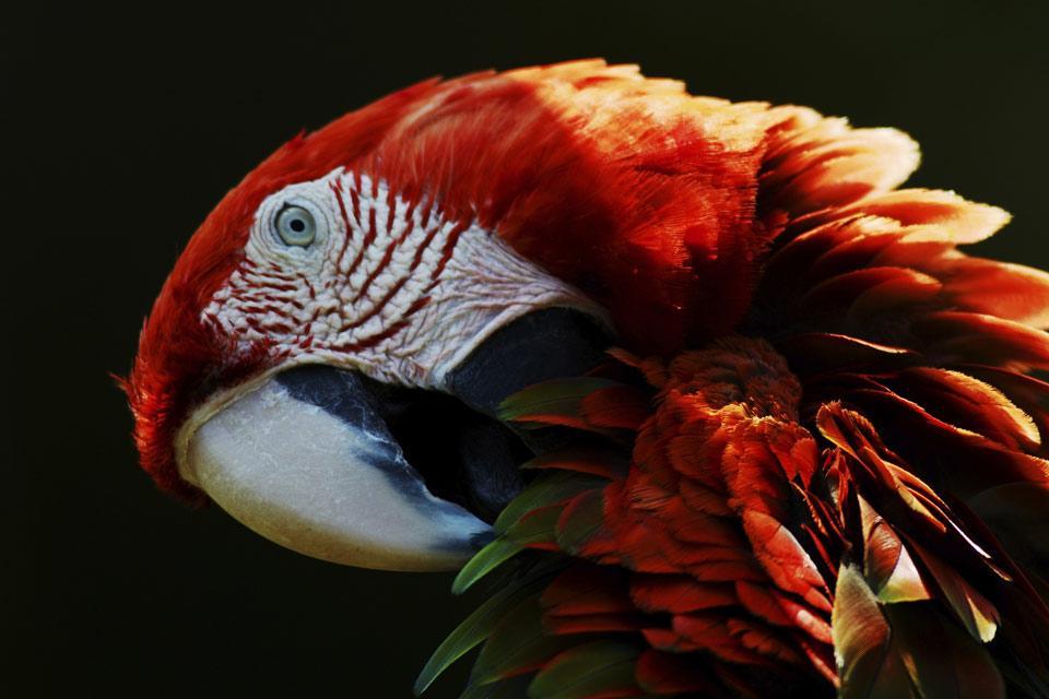 La faune , Un paradis pour les oiseaux , Panama