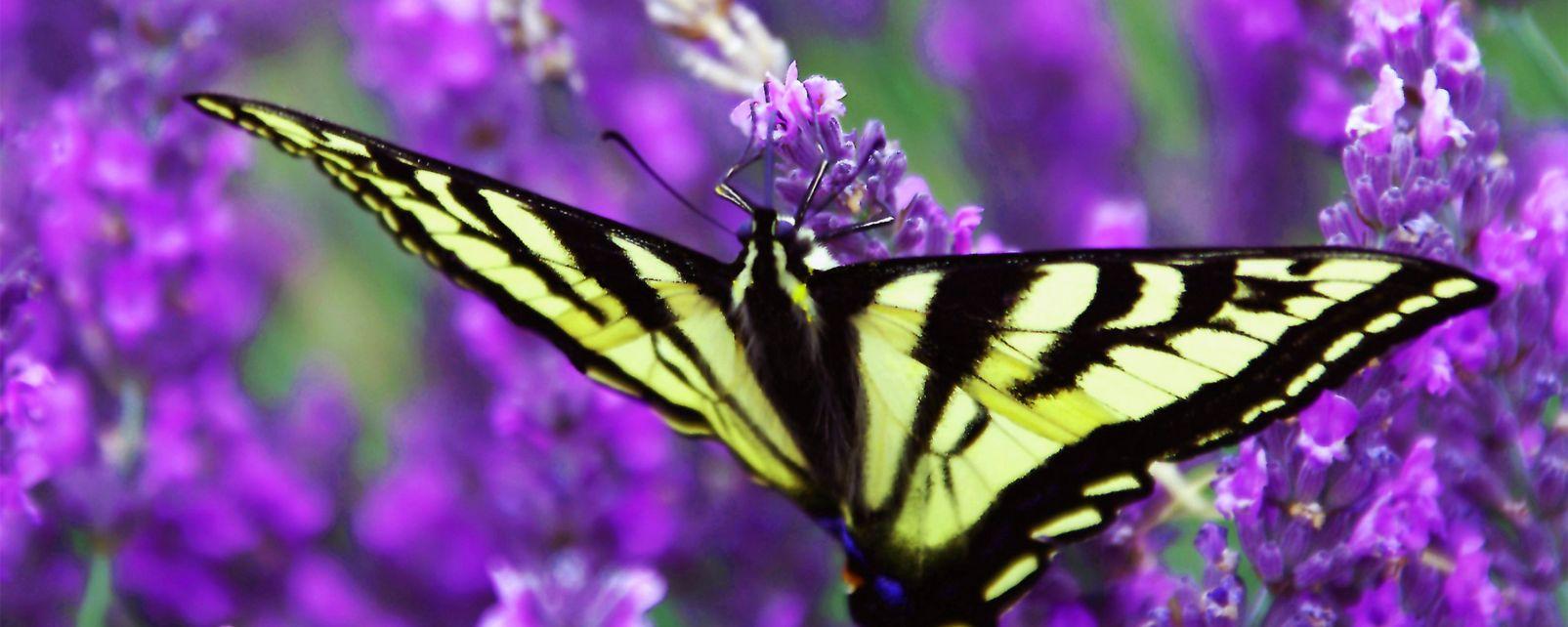 El parque de mariposas de Benalmádena, Le parc aux papillons de Bénalmadéna, Fauna y flora, Andalucía
