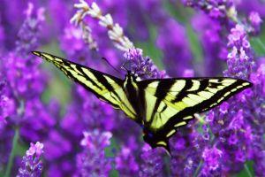 Le parc aux papillons de Bénalmadéna , Espagne