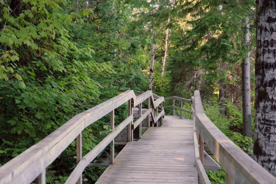 Les forêts mixtes du Saint-Laurent , Cascades , Canada