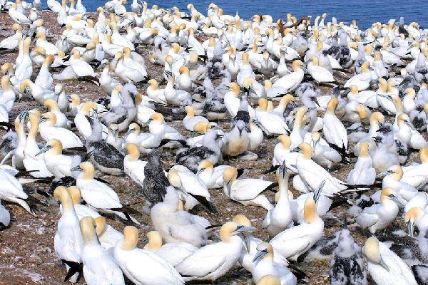 La réserve de Bonaventure , Oiseaux de la réserve , Canada