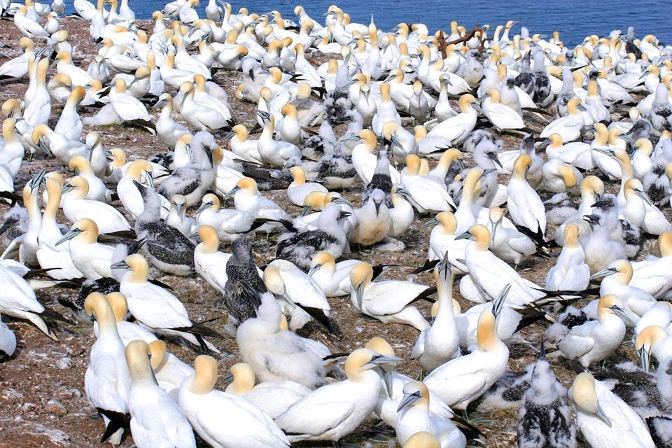 La riserva di Bonaventura , Uccelli della riserva , Canada
