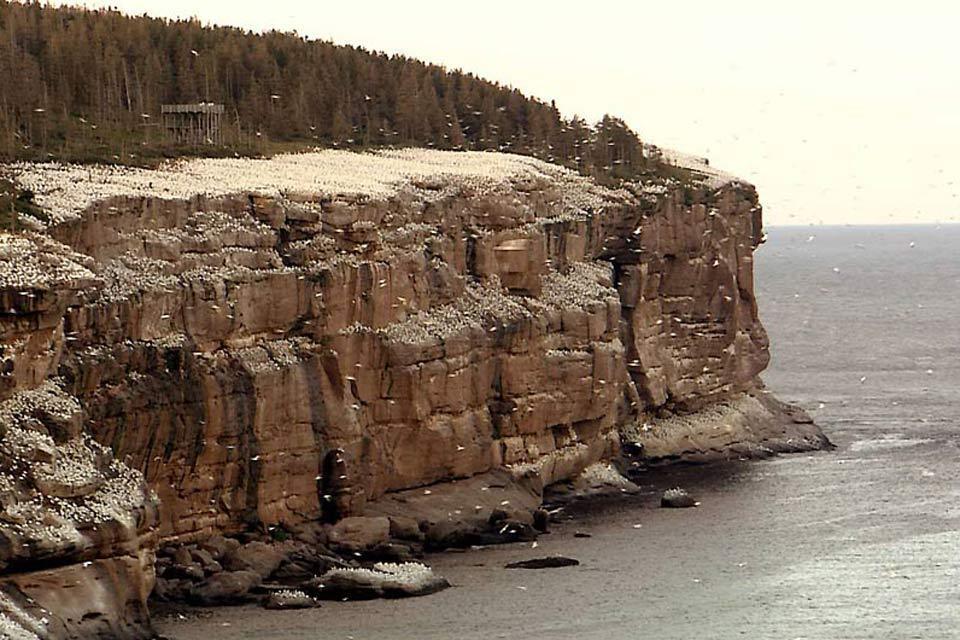 The Bonaventure reserve , The inhabitants of Bonaventure , Canada