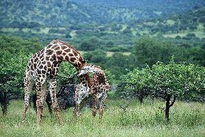 La réserve Hluhluwe-Umfolozi , Hluhluwe-Umfolozi , Afrique du Sud
