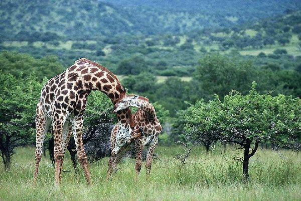 Die Reservate von Hluhluwe und Umfolozi , Hluhluwe-Umfolozi , Südafrika