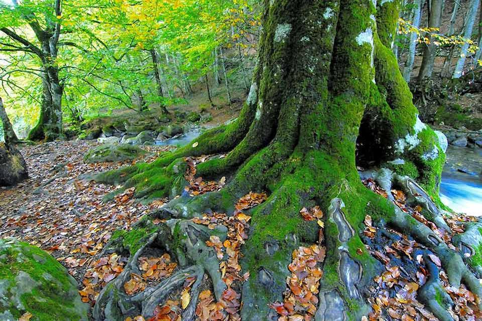 Le patrimoine naturel de l'Ariège , Les forêts , France