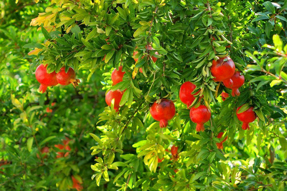 Paradis fruitier, Régime crétois, La gastronomie, Crète