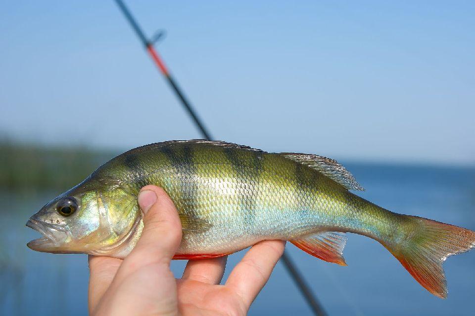La pêche dans la Meuse , Francia