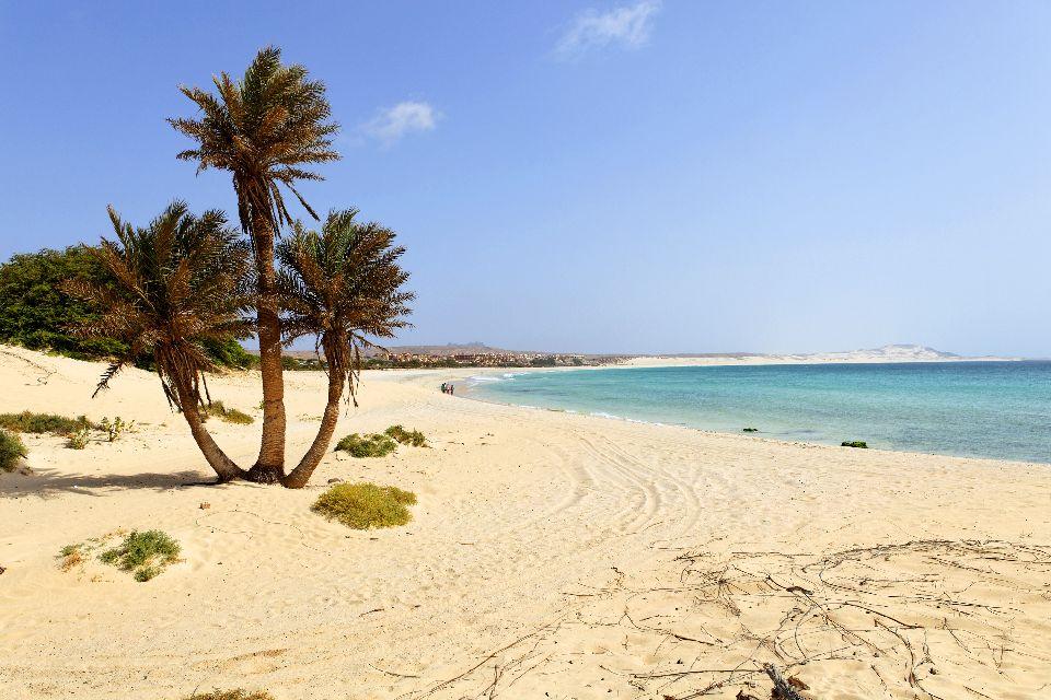 Boavista Island , In the shade of the palm trees , Cape Verde